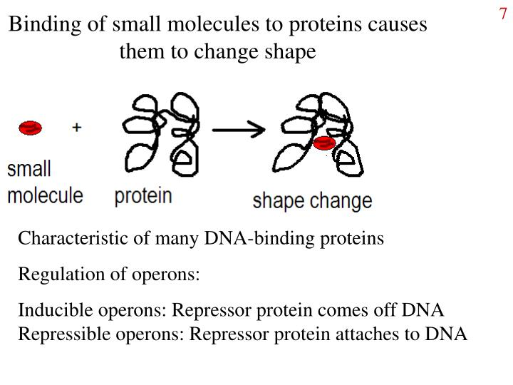 Binding of small molecules to proteins causes them to change shape