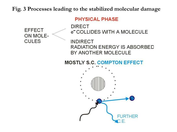 Fig. 3 Processes leading to the stabilized molecular damage