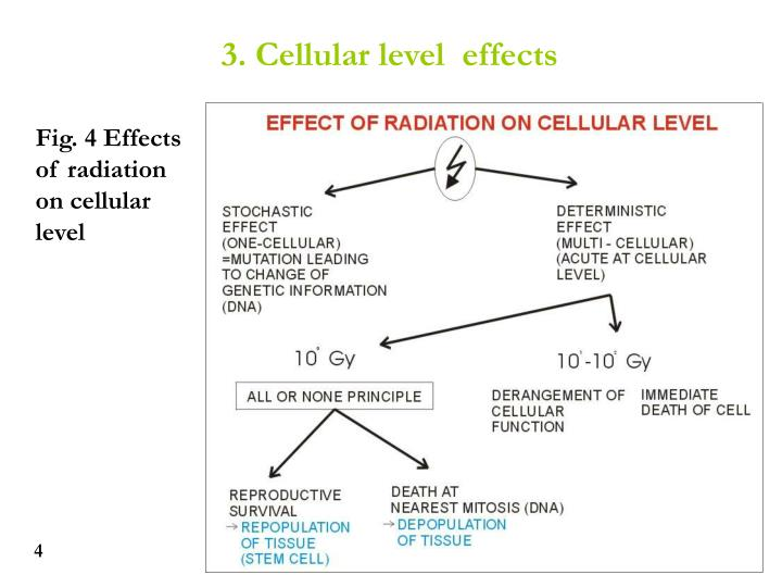 3. Cellular level  effects