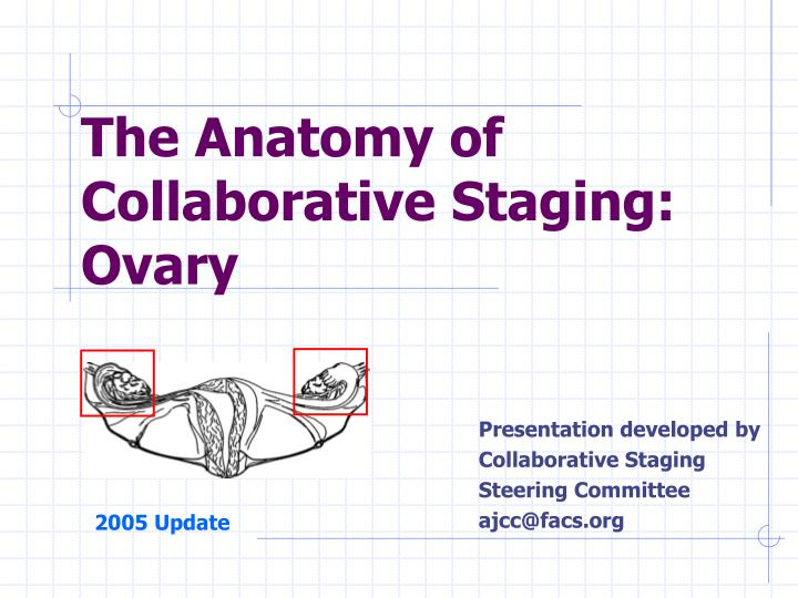 the anatomy of collaborative staging ovary n.
