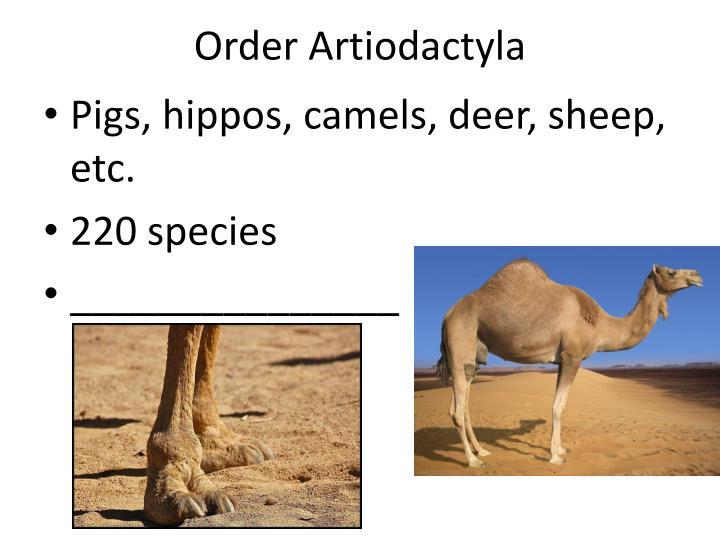 Order Artiodactyla