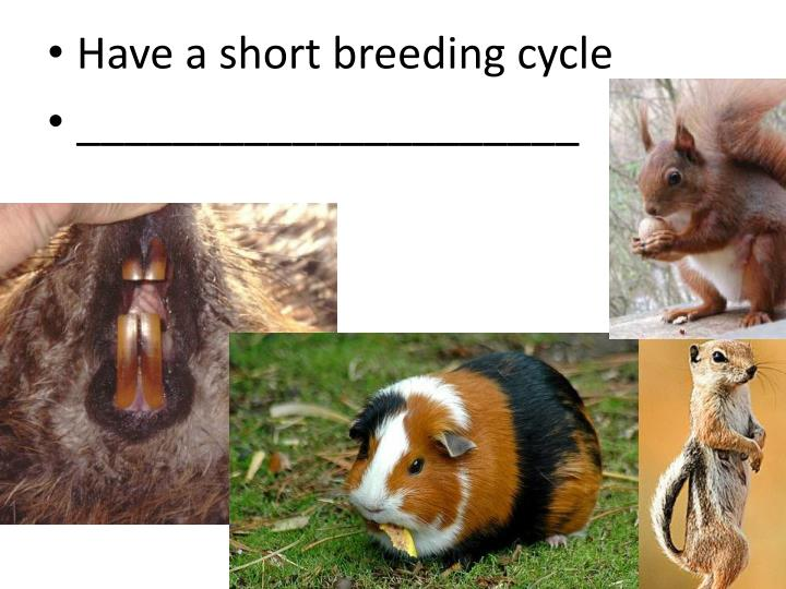 Have a short breeding cycle