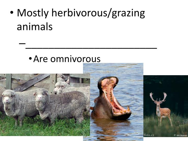 Mostly herbivorous/grazing animals