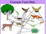 example food web