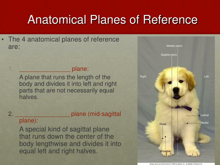 Anatomical planes of reference