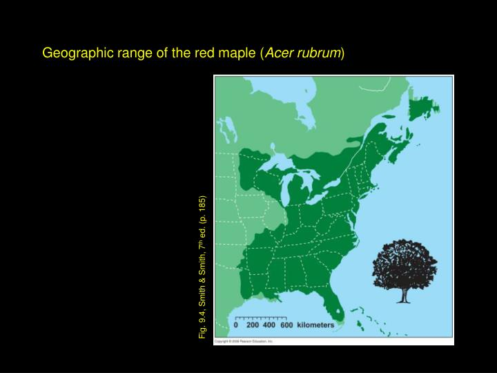 Geographic range of the red maple (