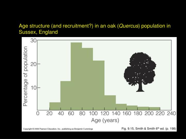 Age structure (and recruitment?) in an oak (