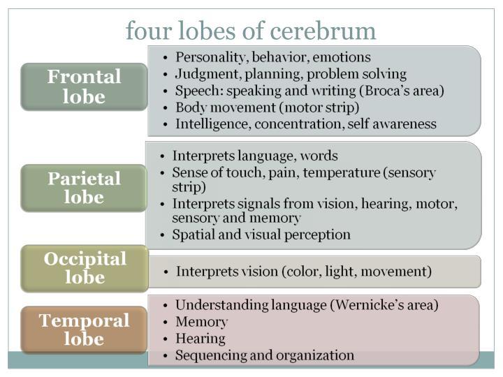 four lobes of cerebrum