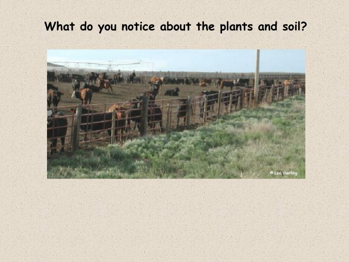 What do you notice about the plants and soil?