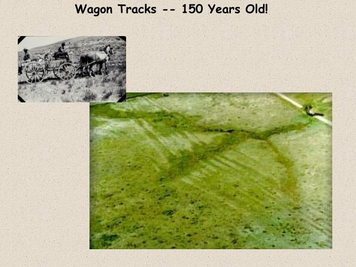 Wagon Tracks -- 150 Years Old!