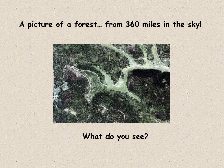 A picture of a forest… from 360 miles in the sky!
