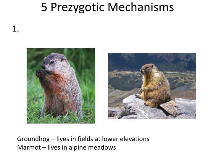 5 Prezygotic Mechanisms