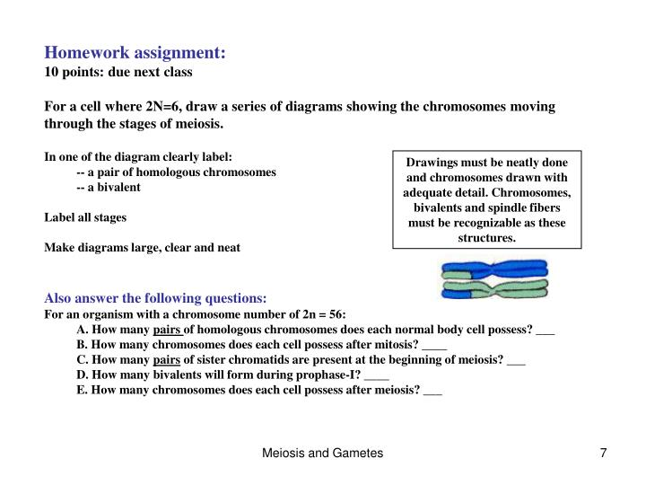 Ppt chapter 11 sexual reproduction and meiosis powerpoint homework assignment ccuart Images