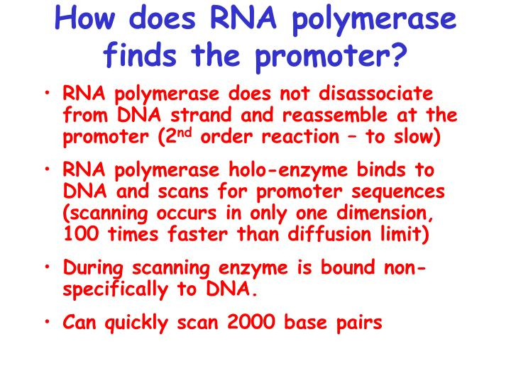 How does RNA polymerase finds the promoter?