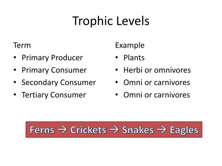 Trophic Levels