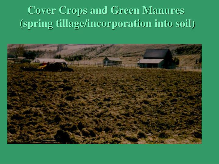 Cover Crops and Green Manures