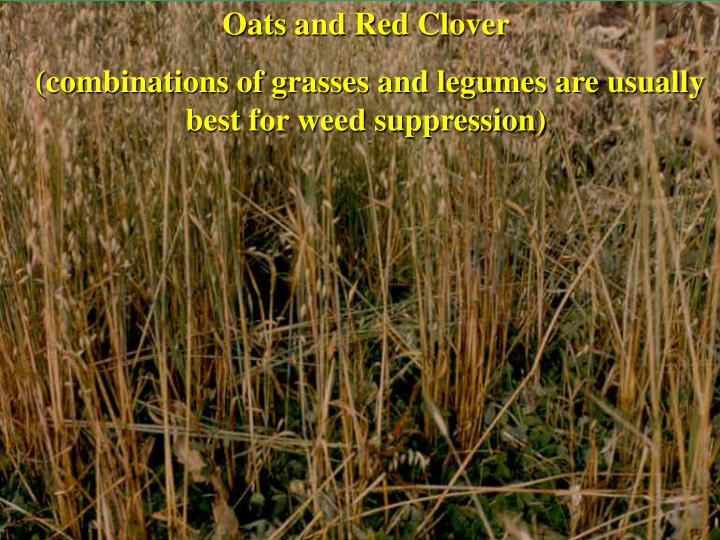 Oats and Red Clover