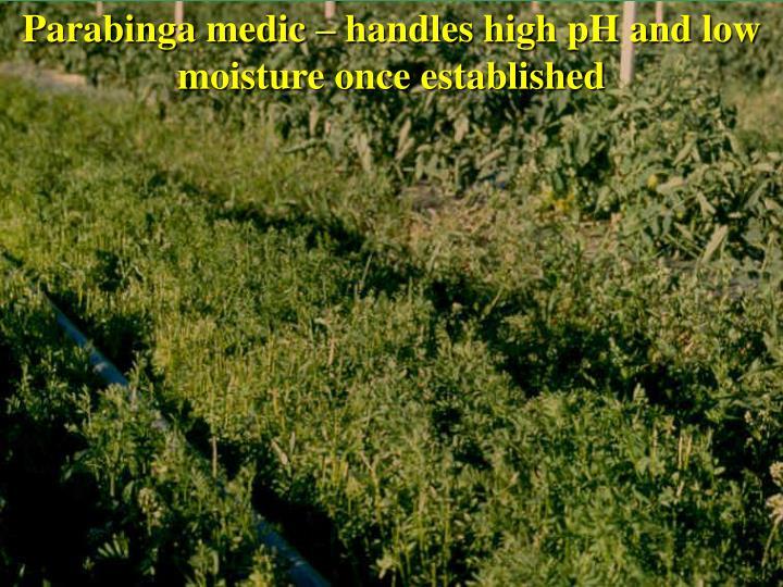 Parabinga medic – handles high pH and low moisture once established