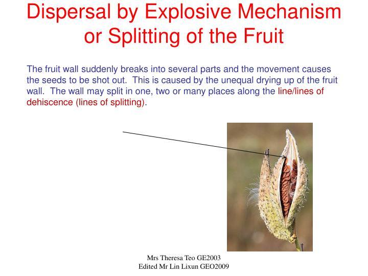 Dispersal by Explosive Mechanism or Splitting of the Fruit