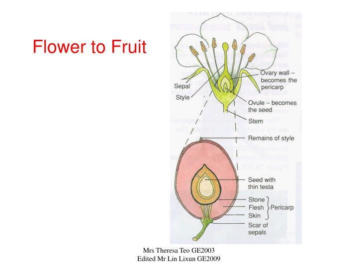 Flower to Fruit