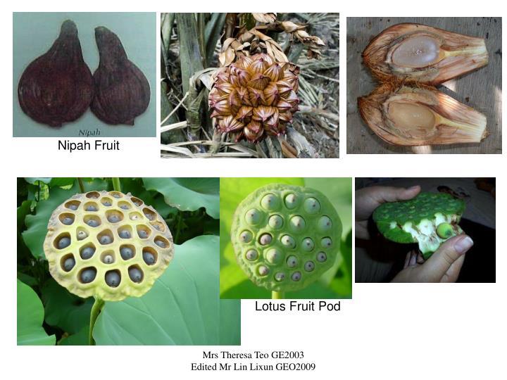 Nipah Fruit