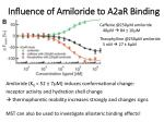 influence of amiloride to a2ar binding