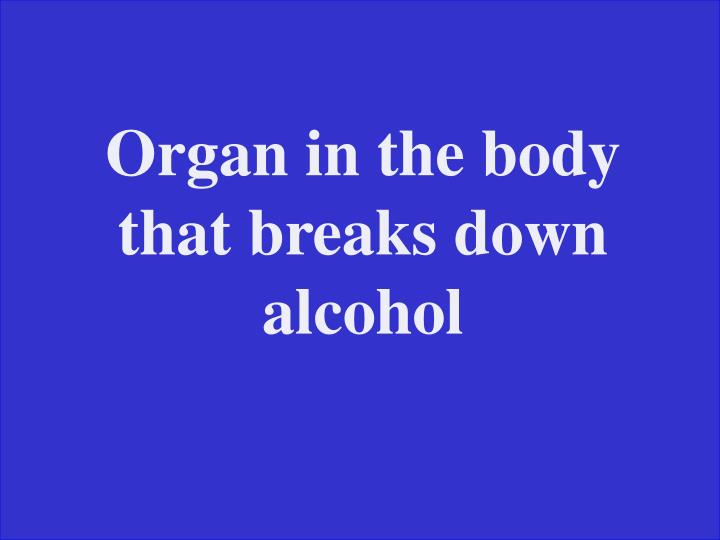 Organ in the body that breaks down alcohol