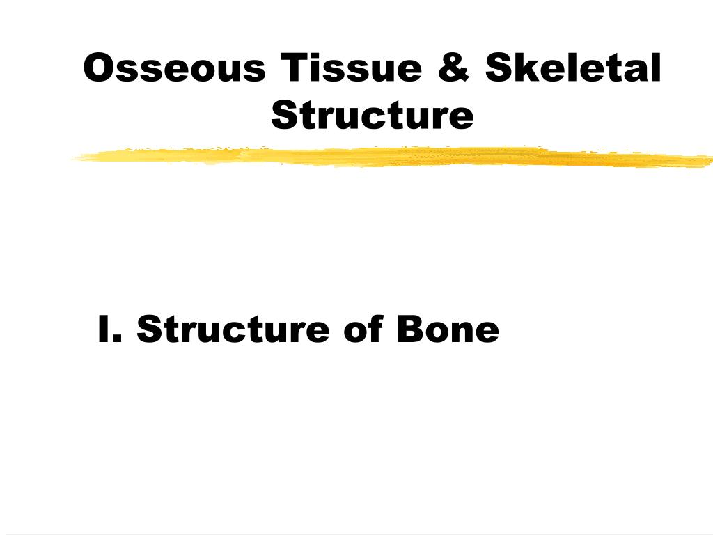 microscopic features of osseous tissue