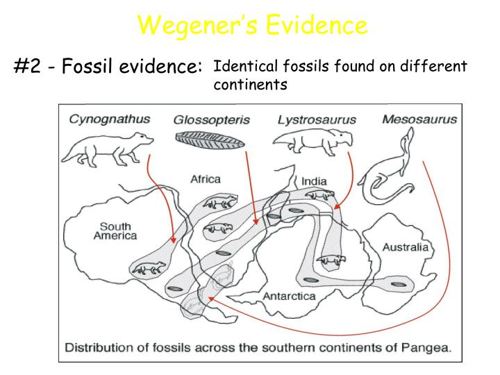 #2 - Fossil evidence: