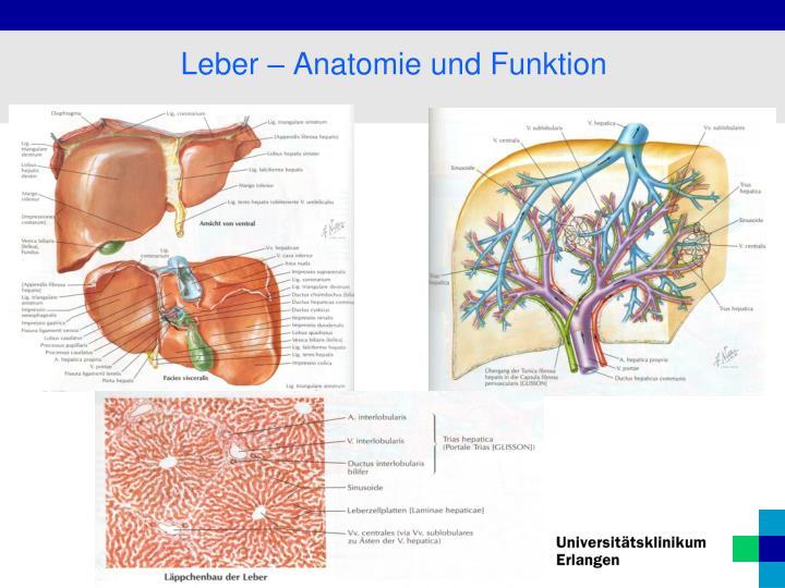 PPT - Lebererkrankungen PowerPoint Presentation - ID:6903850
