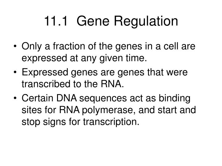 11 1 gene regulation n.