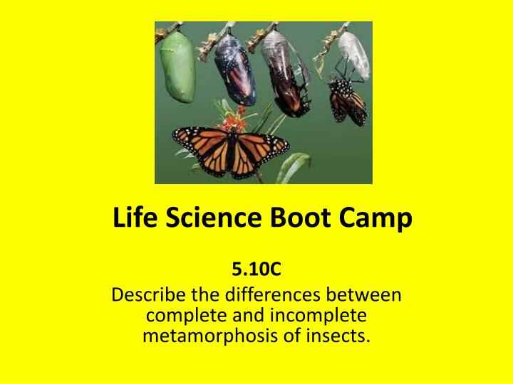 life science boot camp n.