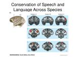 conservation of speech and language across species