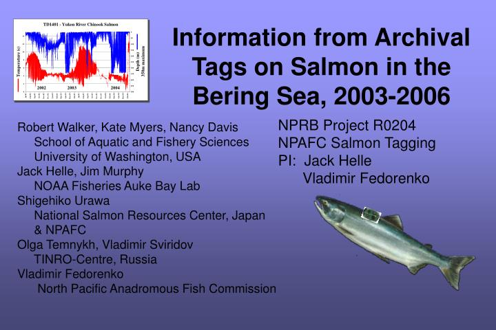 information from archival tags on salmon in the bering sea 2003 2006 n.