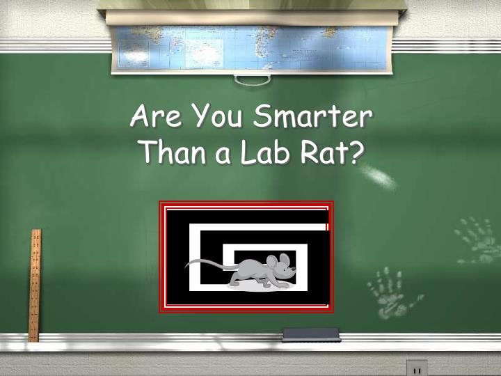 are you smarter than a lab rat