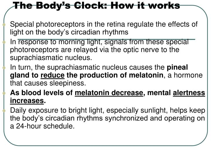 The Body's Clock: How it works