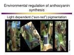 environmental regulation of anthocyanin synthesis