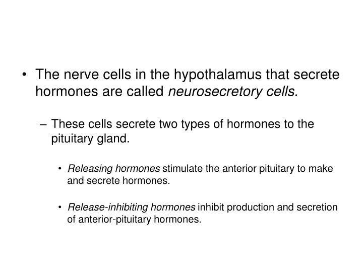 The nerve cells in the hypothalamus that secrete hormones are called