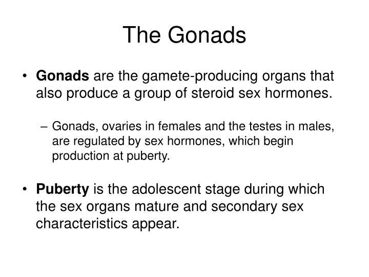 The Gonads