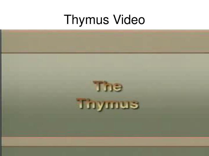 Thymus Video