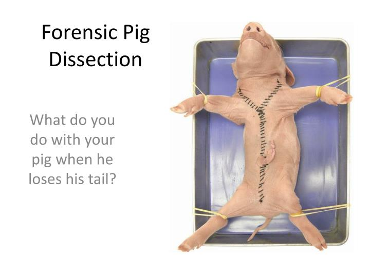 forensic pig dissection n.