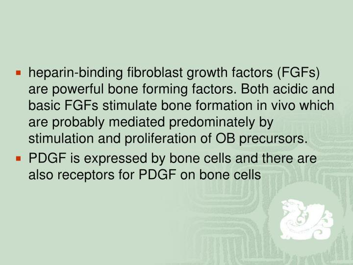 heparin-binding fibroblast growth factors (FGFs) are powerful bone forming factors. Both acidic and basic FGFs stimulate bone formation in vivo which are probably mediated predominately by stimulation and proliferation of OB precursors.