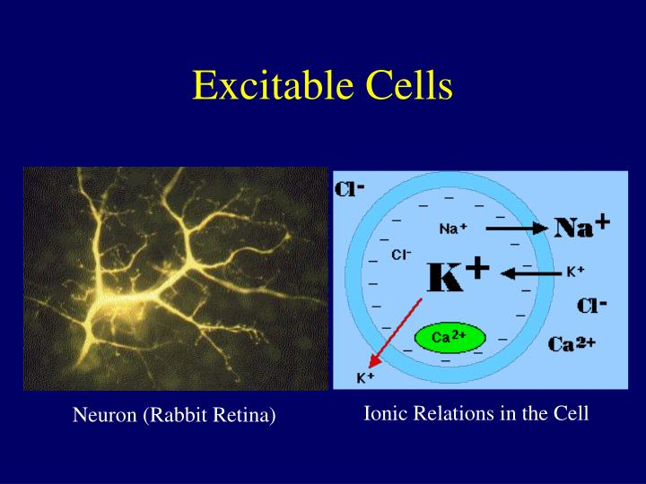 Excitable Cells