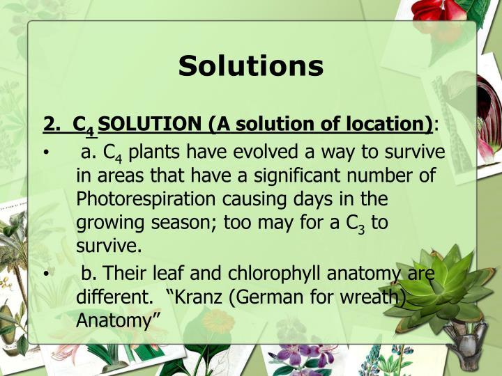 PPT - Photorespiration PowerPoint Presentation - ID:6908092