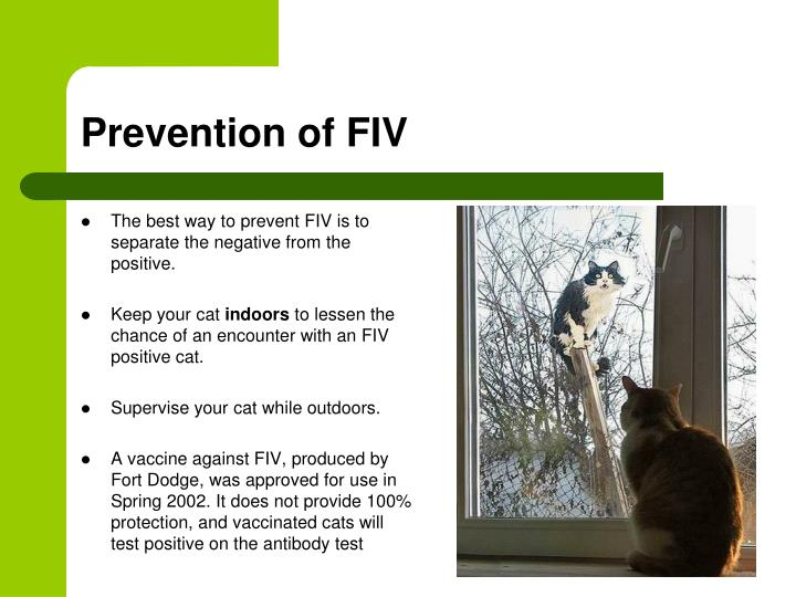 Prevention of FIV