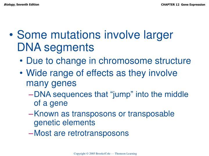Some mutations involve larger DNA segments