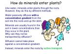 how do minerals enter plants