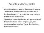 bronchi and bronchioles1