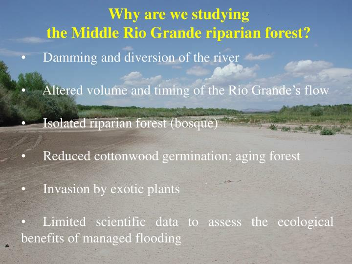 Why are we studying the middle rio grande riparian forest