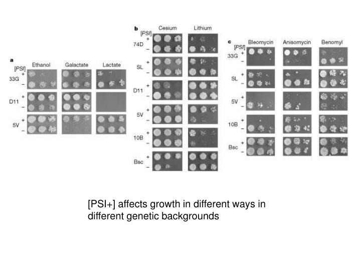 [PSI+] affects growth in different ways in different genetic backgrounds